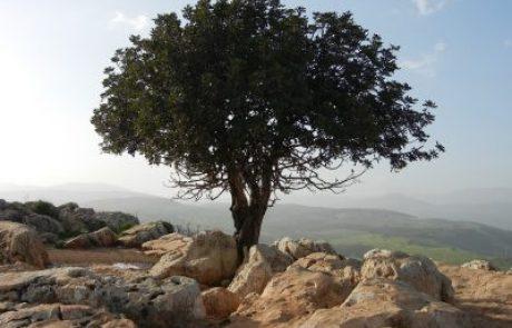 השיעור השבועי: פרשת בראשית